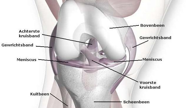 kraakbeen enkel beschadigd